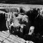 Il Gran Canyon nel tronco di un albero! Foto di Riccardo Vallesi